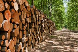 Canada's forest industry