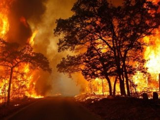 Forest Fire, Breaking News, Ontario News